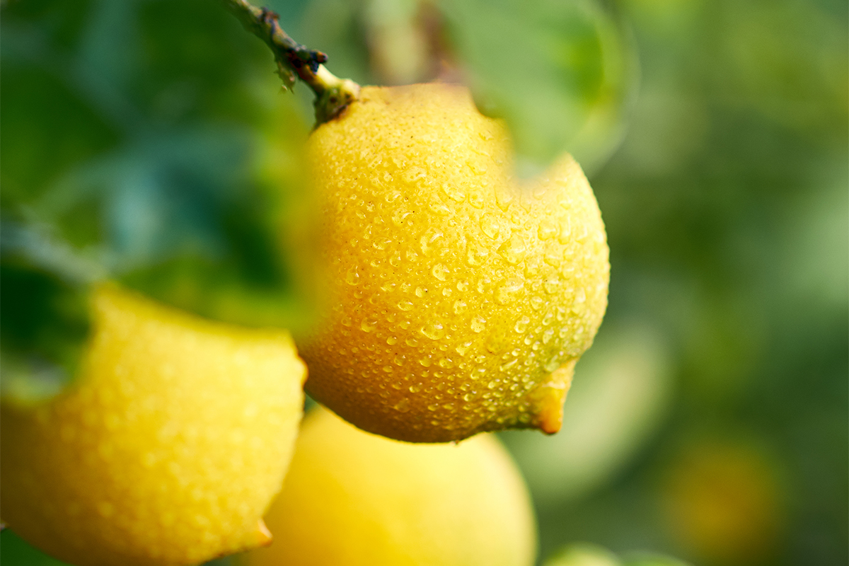 Citrus and vitamin C for muscle growth