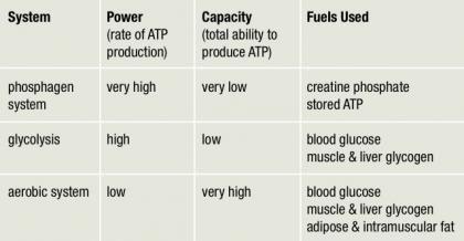 total atp produced in aerobic respiration